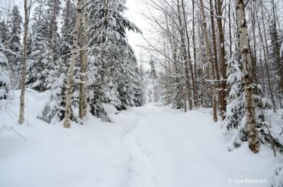 Lumikenkäpolku Oravivuorelle