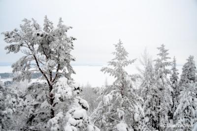 Lumiset puunlatvat, lumen ja jään peittämä Päijänne pilkottaa.
