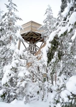 Oravivuoren näkötornin yläosa pilkottaa lumisten mäntyjen välistä.