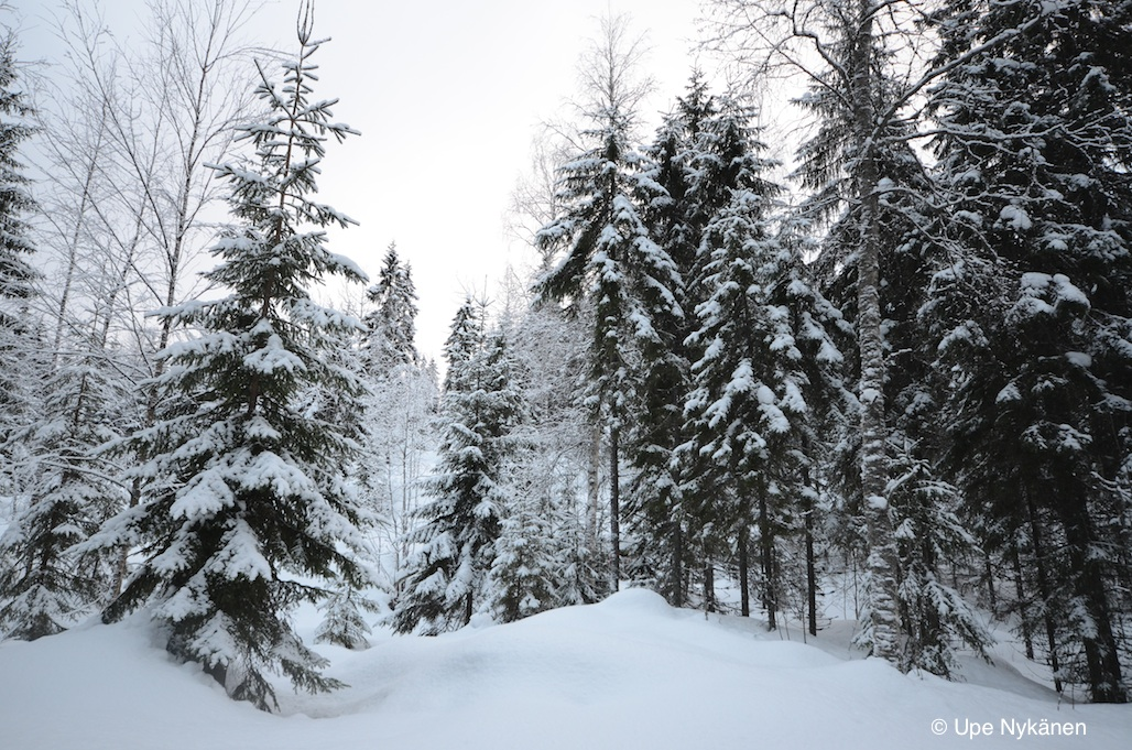 Synninlukko-kallion-paalla-talvi-un
