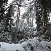 Synninlukon kalliorotko Jämsässä