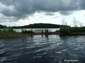 Suomunjärvi-hiekkadyyni-Patvinsuo