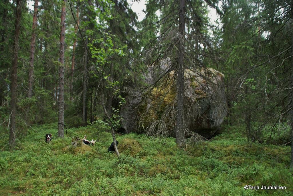Kivi ympäristöineen on rauhoitettu.