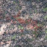 Nuuksio Pitkäjärven kalliomaalaus