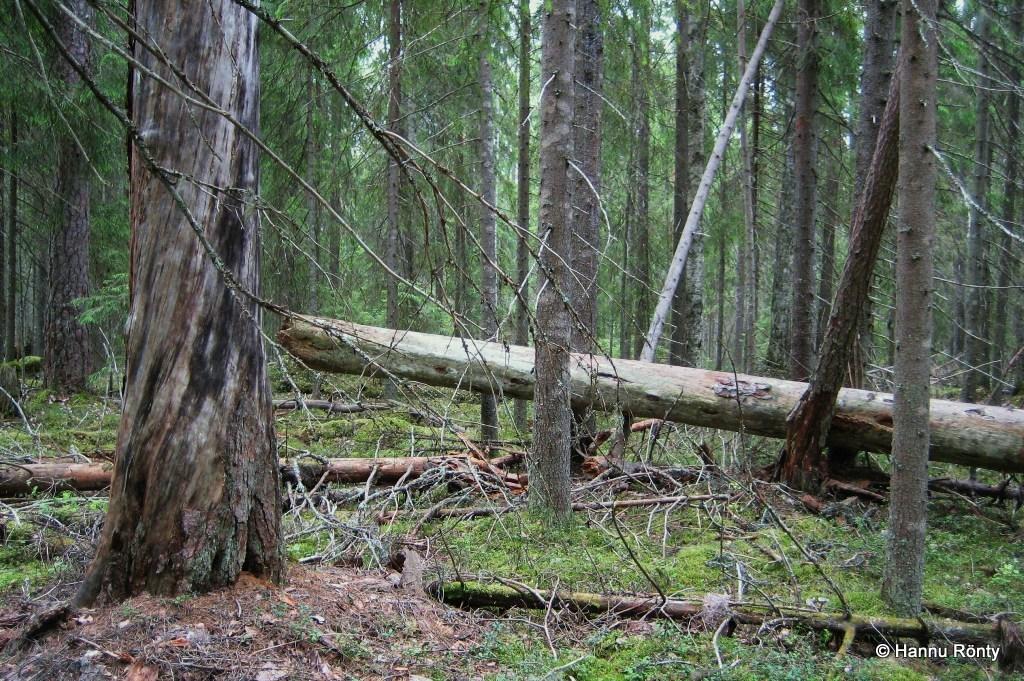 Metsän yksityiskohtia Mastomäen polun varrella.