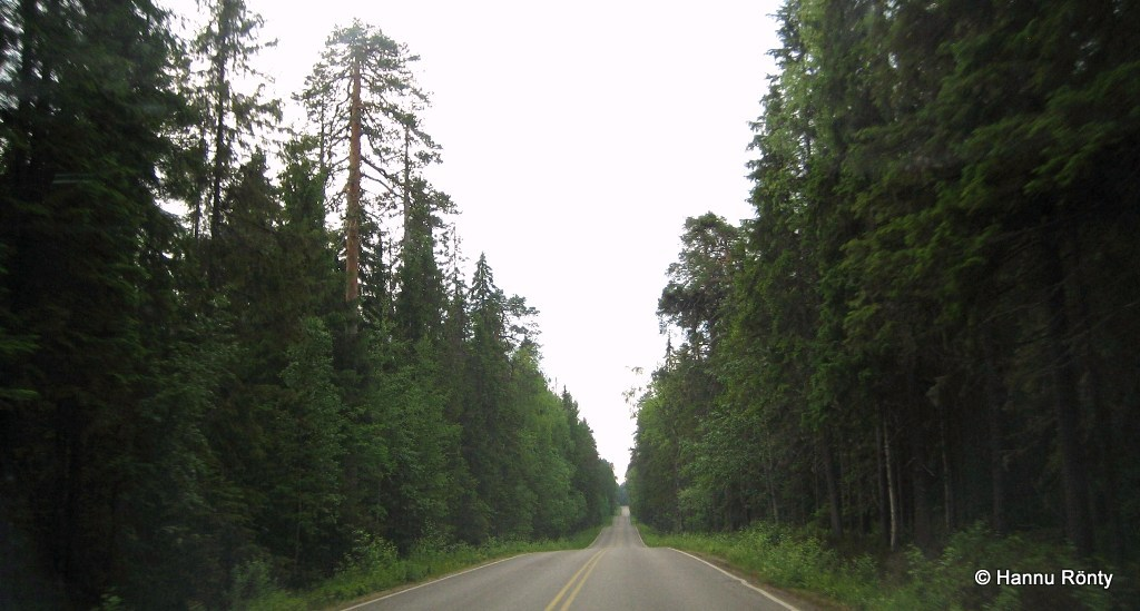 Saarijärven ja Viitasaaren välinen maantie kansallispuiston kohdalla.