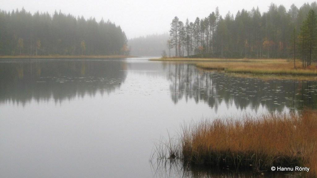 Tiilikkajärven Luodelahden pohjukkaa.