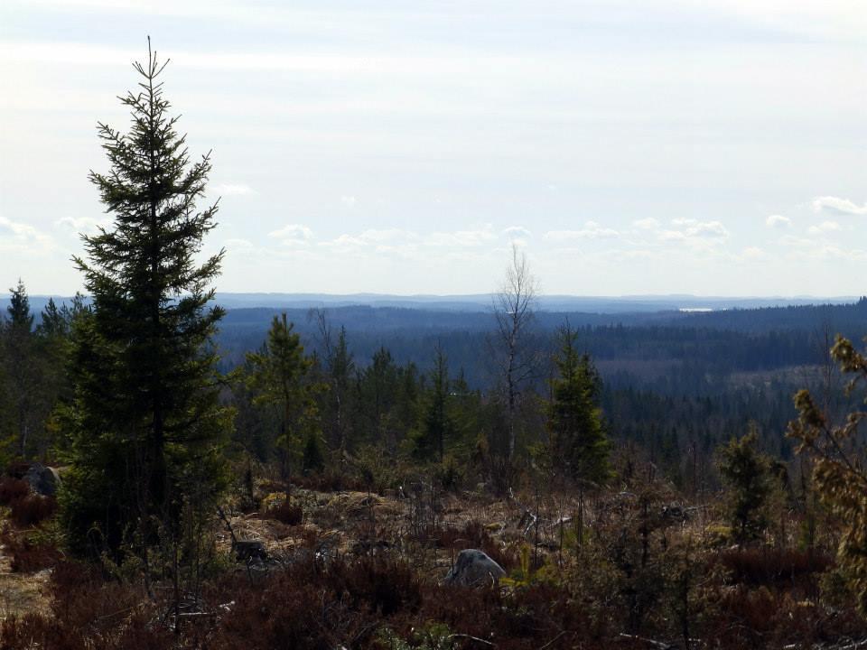 Sinisiä näkymiä Kangasniemen Sinivuorelta.