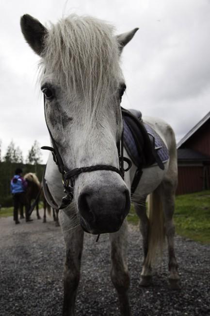 Paimentupa hevostalli, Koli