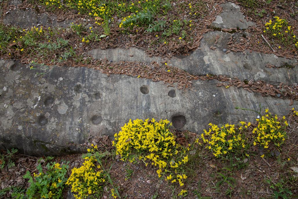 Vanha uhripaikka Lohjalla. Kuppikiven kuppeihin on jätetty esimerkiksi viljaa.