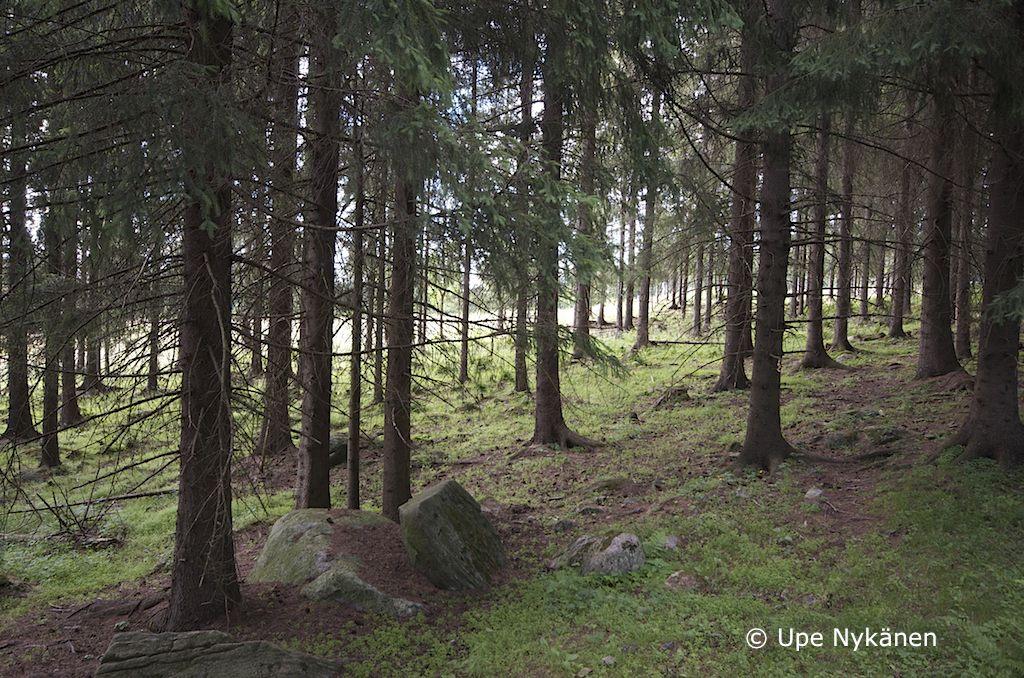 Metsälaidun, Väisälänmäki