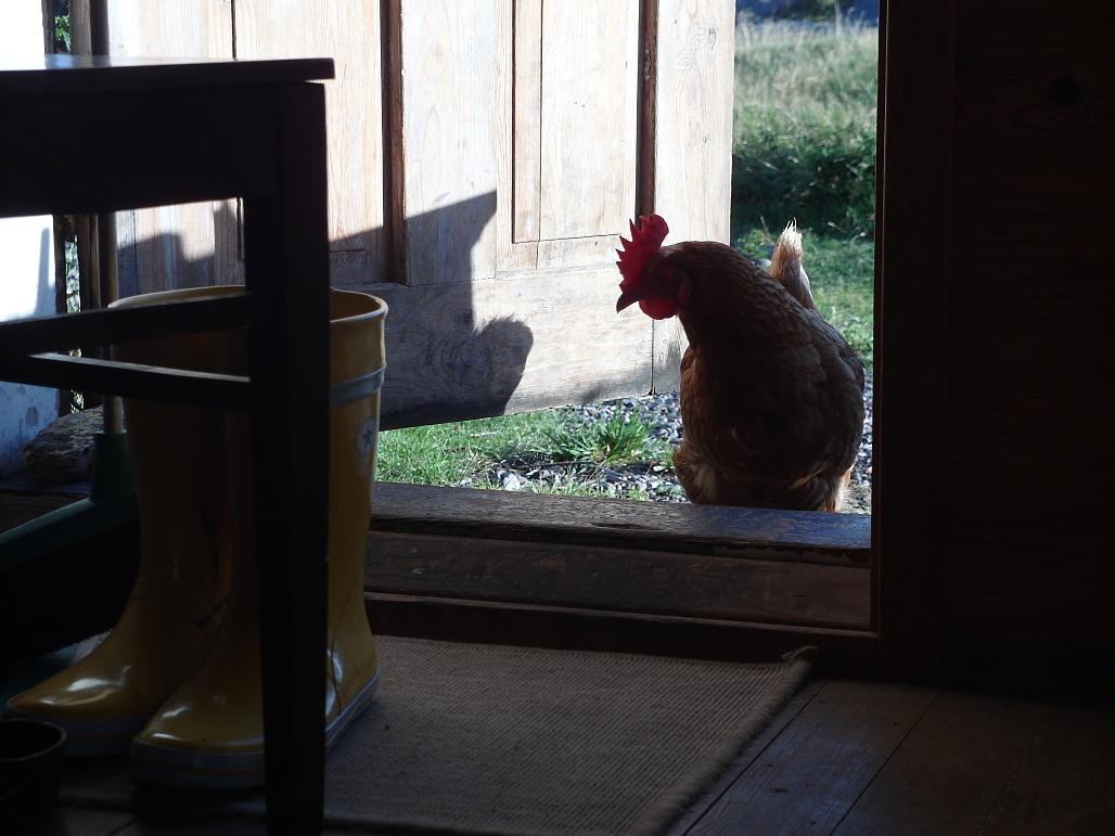 Saimme aamupalasta kiinnostuneita vieraita.