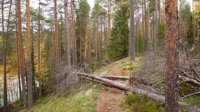 Tervetuloa Julunkiven luonnonsuojelualueelle