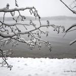 Lumisia oksia, Lammassaari