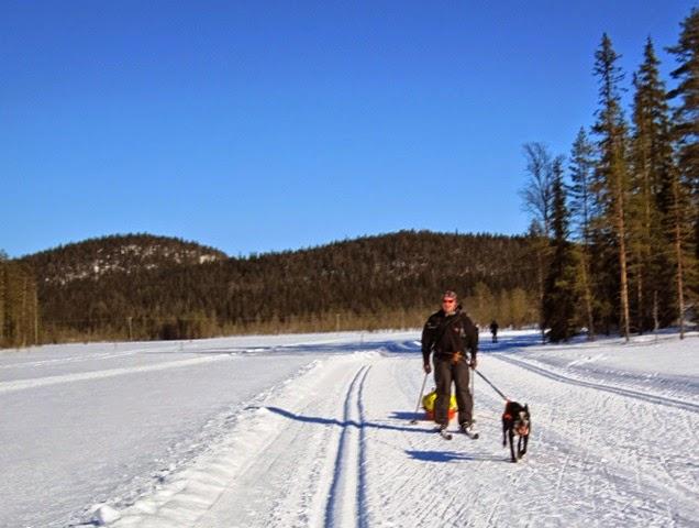 Syötteellä on upea verkosto latuja, joilla saa hiihtää koiran kanssa.