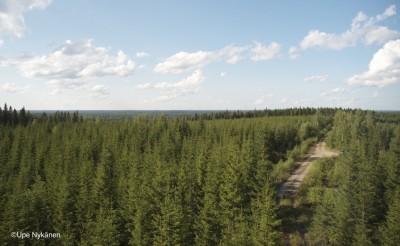 Metsämaisemaa Perkausvuoren näkötornilta, Kivijärvi