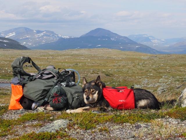 Koiran kanssa vaeltamassa – näin varmistat 565abda437