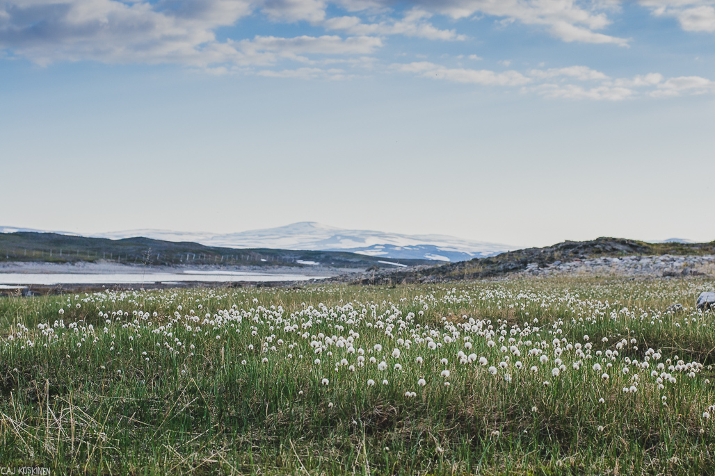 Guolasjärvi oli todella kaunis paikka.