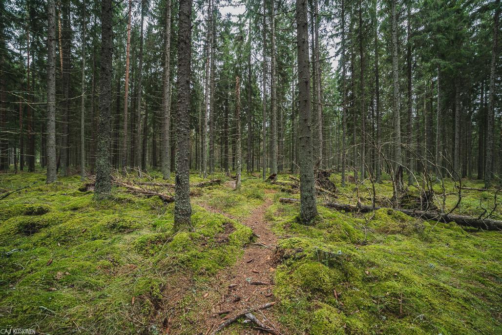Alkutaipale parkkipaikalta on sankkaa metsää.