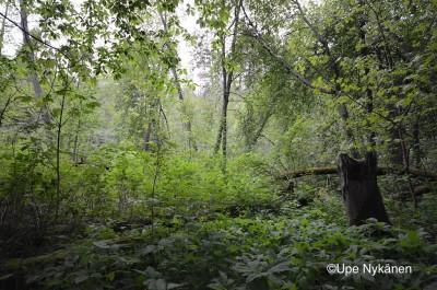 Tourujoen luontopolun lumoa