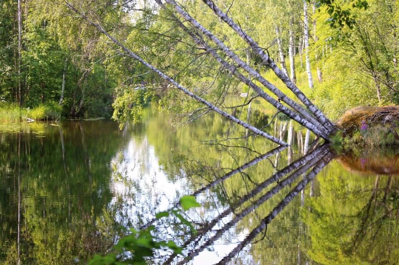 Luonnonpuistot Suomi