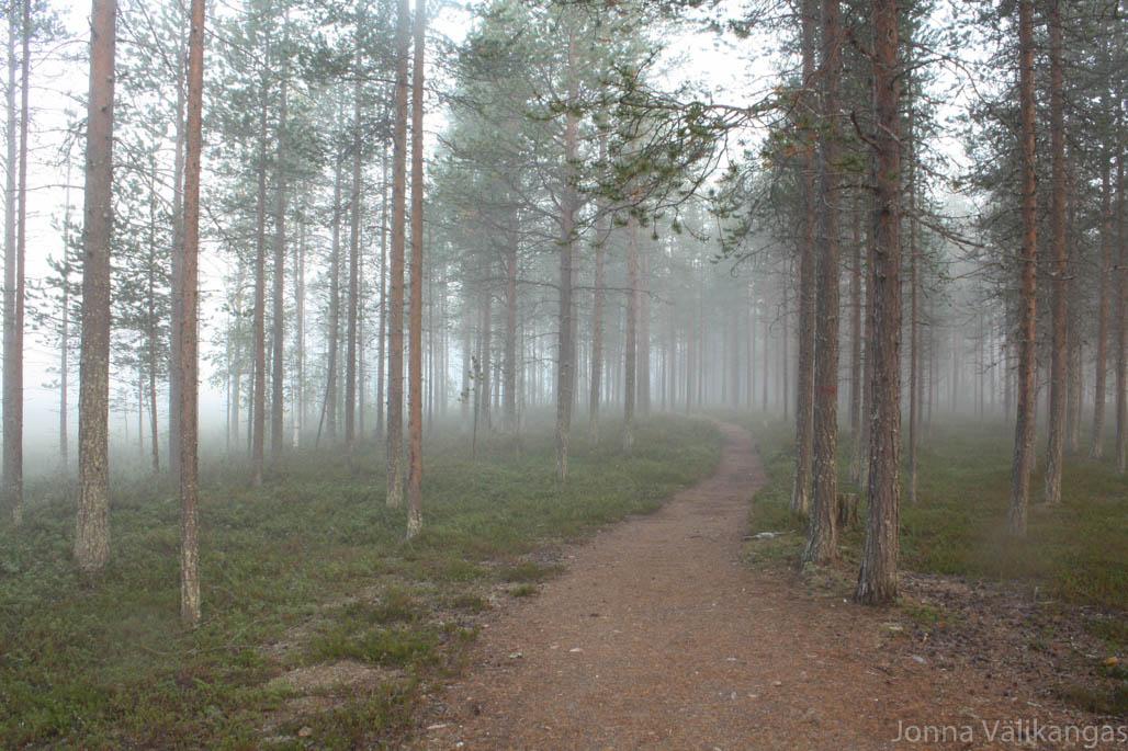 Aamukuudelta metsässä leijui keijukaismainen usva.