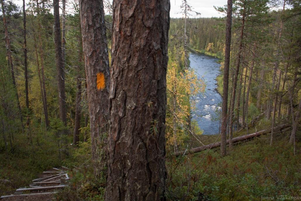 Savinajoki. Karhunkierros on merkitty oranssein maalimerkein.