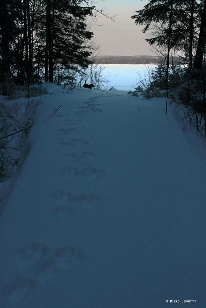 Väinö paineli innolla lumella menemään, usein kymmeniä metrejä edellä.