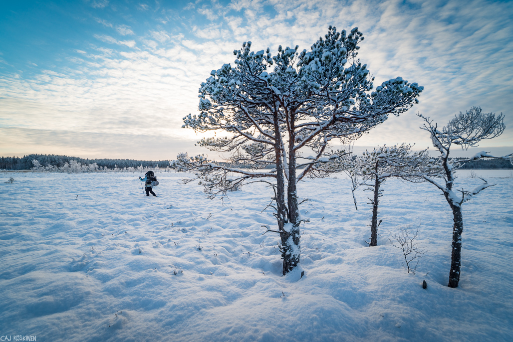 Soinen Hamarijärven reunusta oli helppoa hiihdettävää.