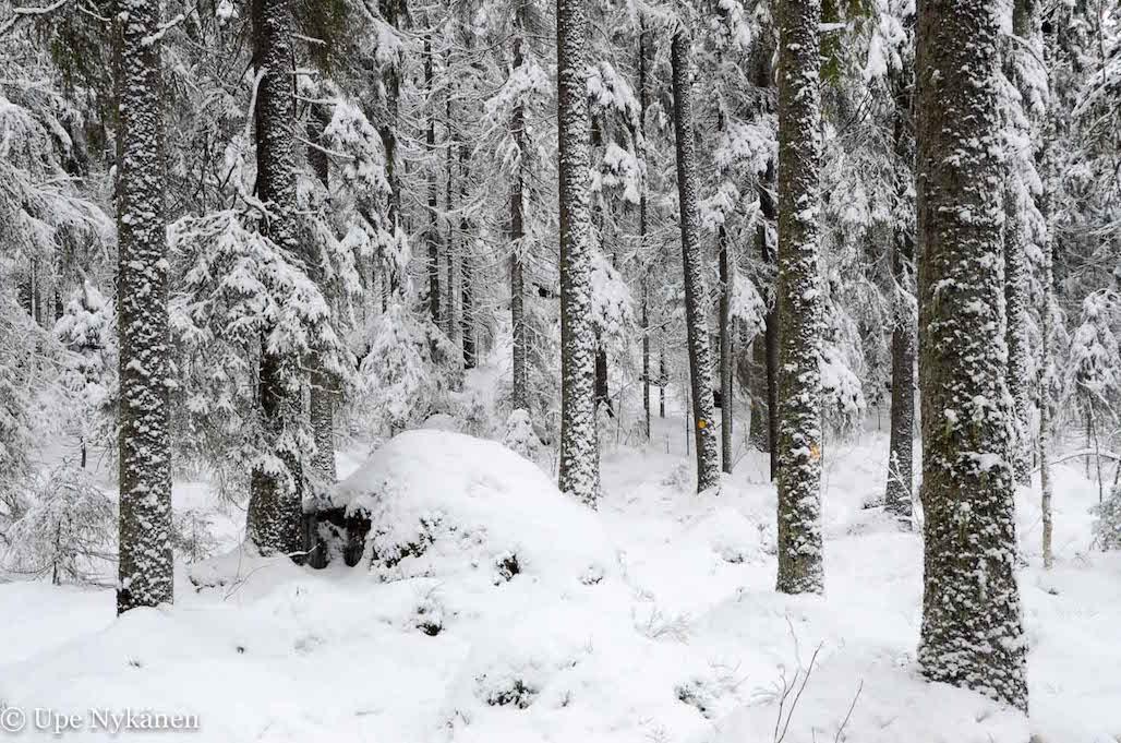 Lumimetsä Touruvuorella