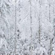 Lumimetsä