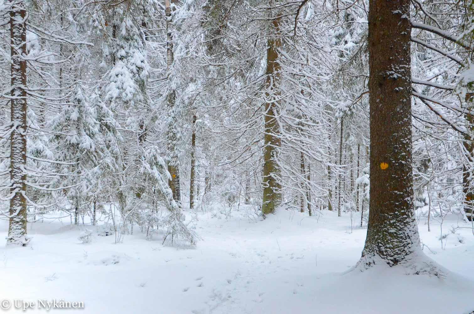 Luminen luontopolku