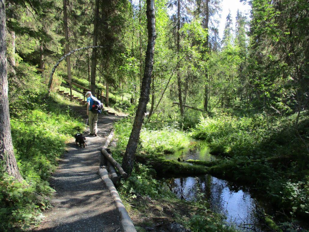 Pienellä Karhunkierroksella Oulangan kansallispuistossa.