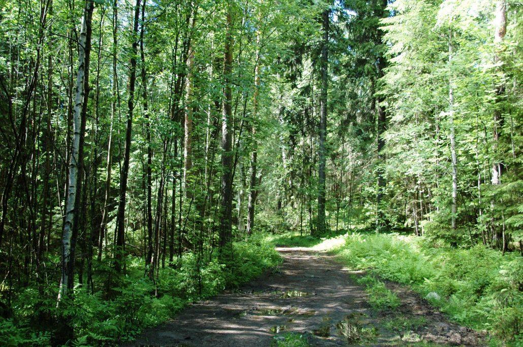 Bisajärvi (4)