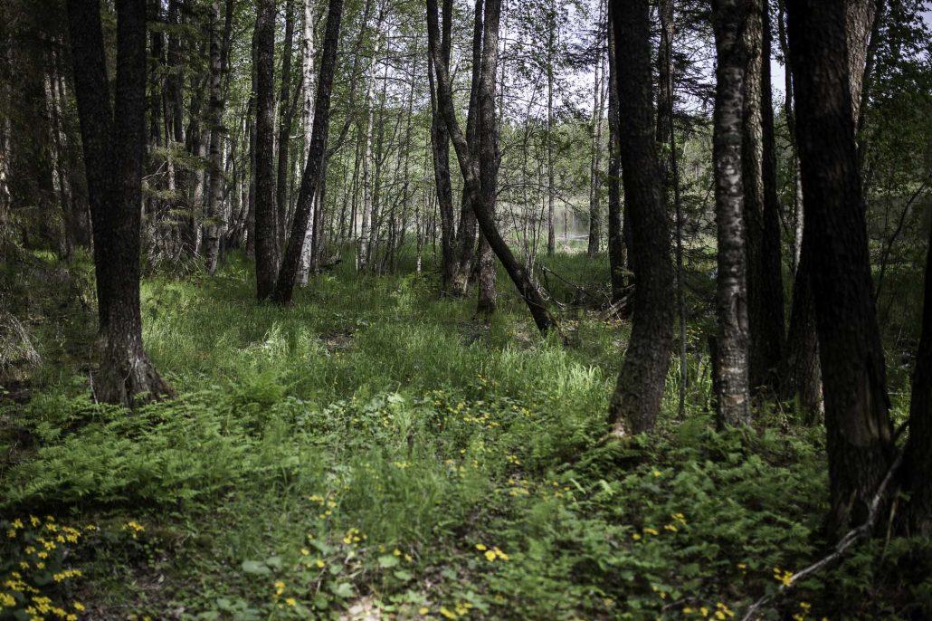 lintikon luontopolku-37