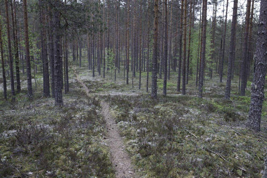lintikon luontopolku-46
