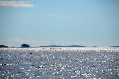 Meren välkettä paluumatkalla Kalkkirantaan Pirttisaaresta