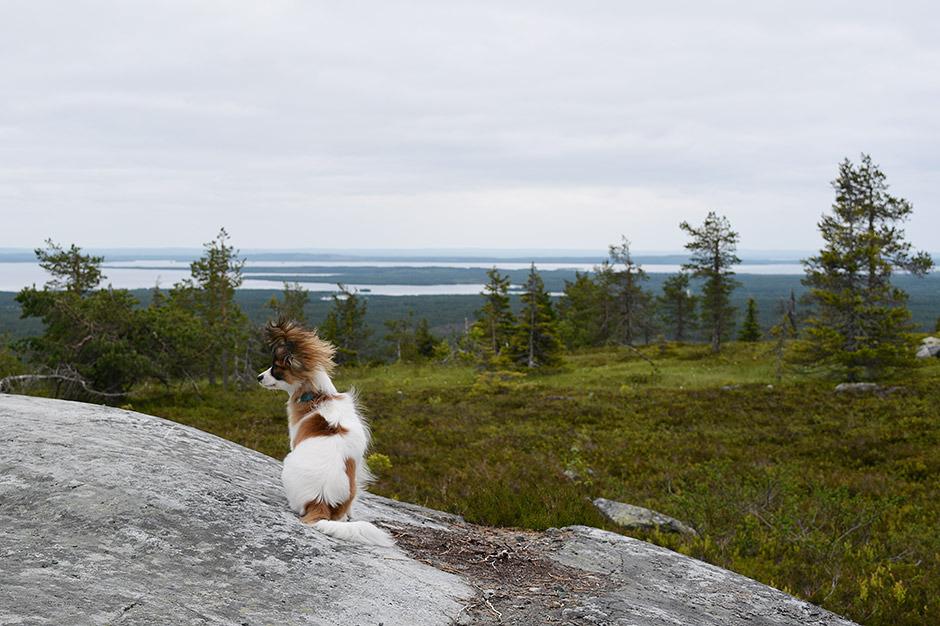 Haiku Riisitunturin kansallispuistossa.