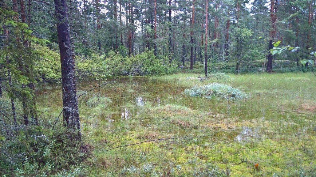Pieni lampi lisää luonnon monimuotoisuutta alueella.