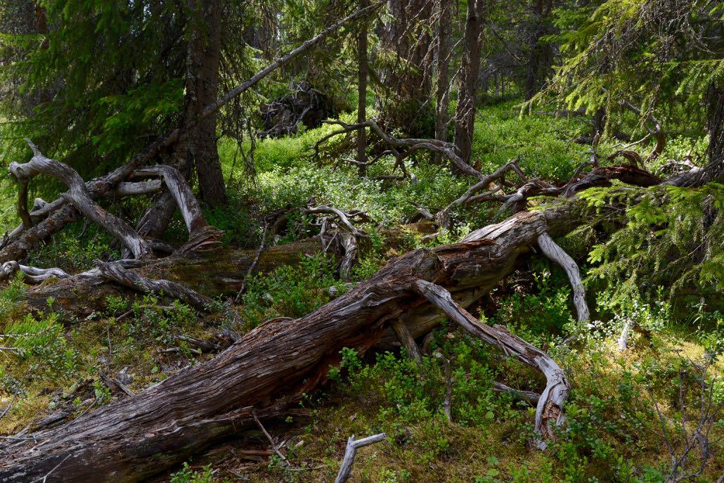 Maapuut
