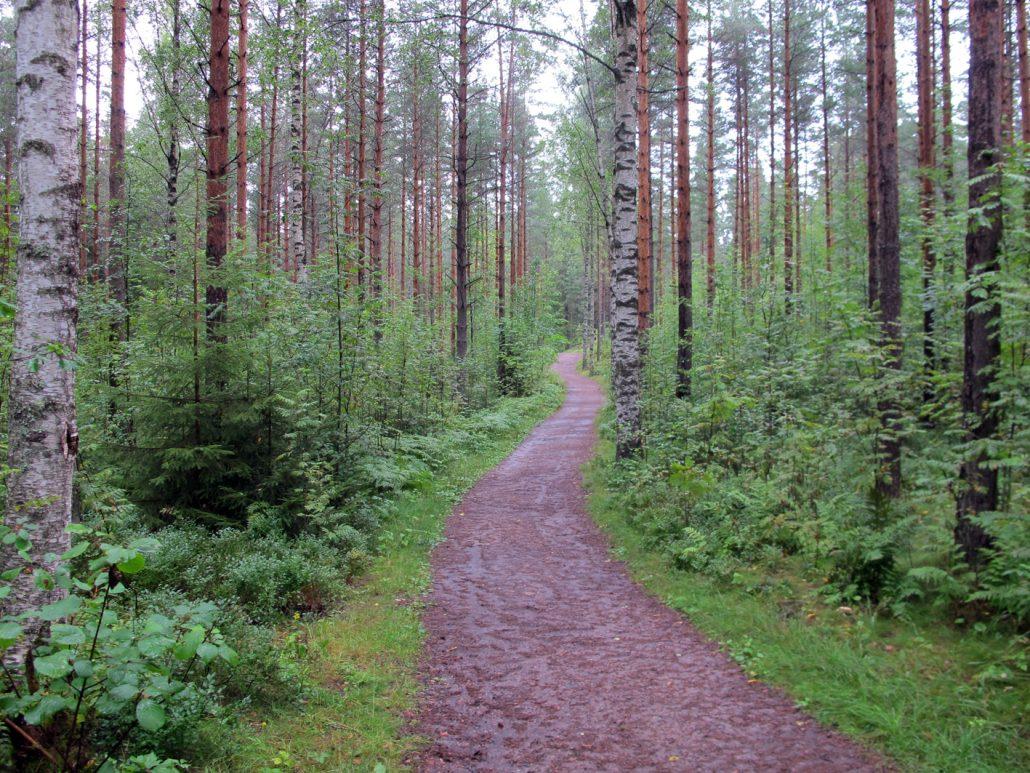 Alkumatkasta metsä oli opastaulun mukaan tasan 50-vuotiasta.
