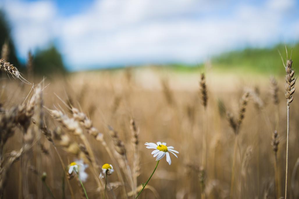 Kauniit peltomaisemat ympäröivät Vakkavuorta.