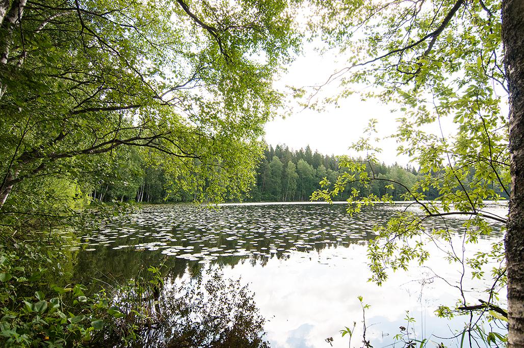 Näkymä järvelle Sonnin ottanlahdelta.
