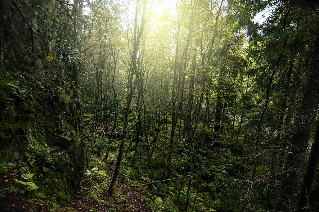 Jos tässä metsässä ei asu menninkäisiä ja keijuja, niin ei sitten missään.