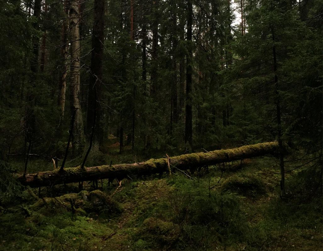 haltialametsapuu