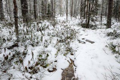 Päijätsalon luontopolkua talvella