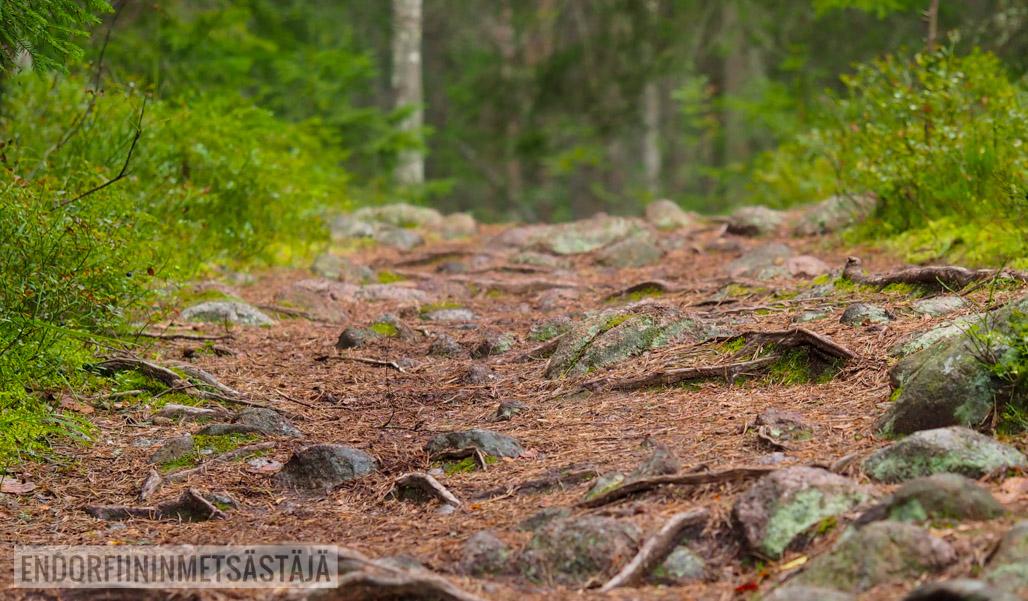 Polku polkujuoksijalle Kuva: Terhi Jaakkola, Endorfiininmetsästäjä