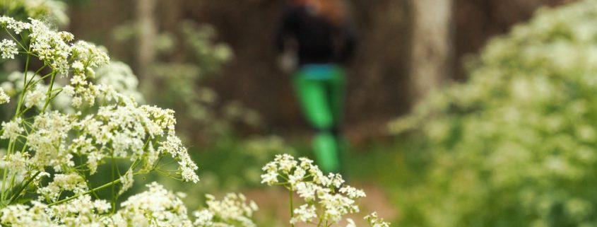 Polkujuoksija kesäpolulla Kuva: Terhi Jaakkola, Endorfiininmetsästäjä
