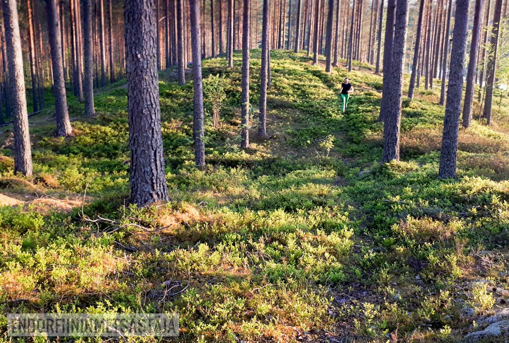 Polkujuoksija kangasmaastossa Kuva: Tom Toivonen