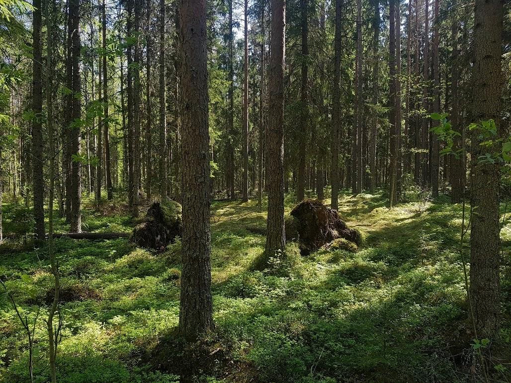 Liesjärvi reitit